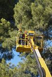 Tree work, pruning operations. Crane and pine wood forest. Royalty Free Stock Photography