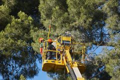 Tree work, pruning operations. Crane and pine wood. Forest Stock Photo