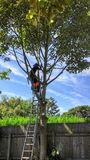 Tree work Stock Photo