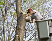 Tree Worker Stock Photography