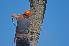 Tree Worker. With Chainsaw Royalty Free Stock Photos