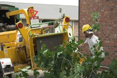 Tree workers running chipper Stock Images