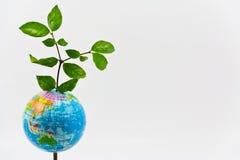 TREE WORLD Stock Photos