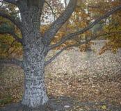 Tree with writing Stock Photos