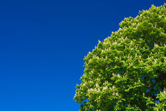 The tree wtih blue sky Stock Image