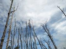 Tree& x27 di morte; s Immagine Stock Libera da Diritti