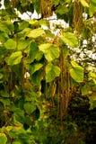 Tree& x27; för s fingrar länge Royaltyfri Fotografi