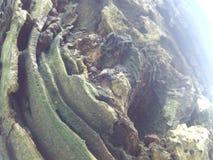 tree& x27; s foto Royalty-vrije Stock Fotografie