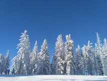 Tree& x27 ; s sur la montagne Photographie stock
