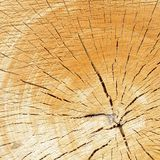 Tree year rings Royalty Free Stock Photography