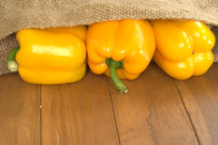 Tree yellow bell pepper pour out of old agriculture sack Royalty Free Stock Photography