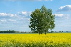 Tree on a yellow field above the sky with clouds stock photos
