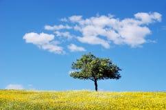 Tree in yellow field at alentejo region Stock Photo