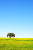 Tree in yellow field, Portugal Stock Photography