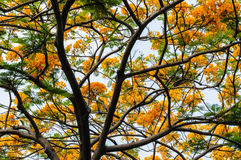 Tree with yellow flower and sky Stock Image