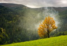Tree with yellow foliage in foggy mountains Stock Image