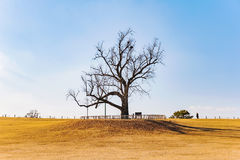 Tree in a yellow grass field in Olympic Park Seoul Royalty Free Stock Photography