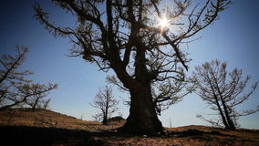 Tree on a yellow hill with the sun on blue sky background. stock video footage