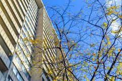 The tree with yellow leaves and the tall concrete building. In the heart of Montreal downtown Stock Photo