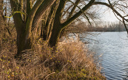 Tree and yellowed reeds at the waterfront Stock Photos