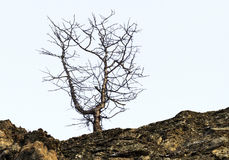 The tree Zen Stock Images