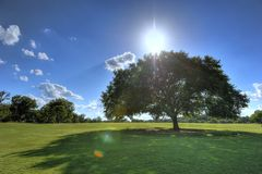 Tree in Zilker Park, Austin, Texas Royalty Free Stock Photos