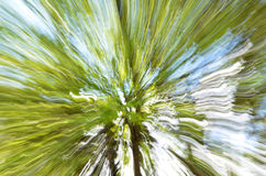 Tree zoom background Stock Photography