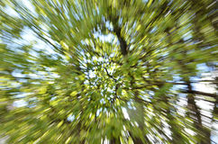 Tree zoom background Royalty Free Stock Photos