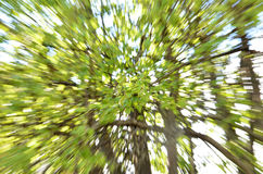 Tree zoom background Stock Photo