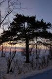 Tree1 isolé images libres de droits
