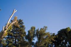 Treeagainst天空 免版税图库摄影