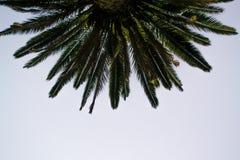Treeagainst天空 库存照片