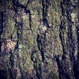 Treebark背景 免版税库存图片