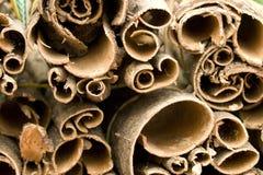 Treebark Stock Foto's