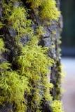 Treebark met mos Stock Foto