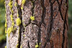 Treebark with moss Stock Images
