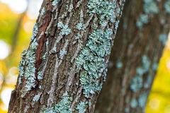 Treebark with turquoise moss Royalty Free Stock Photography
