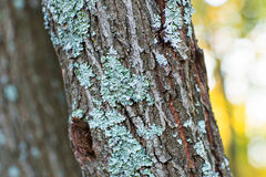 Treebark with turquoise moss Stock Photos