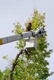 treebeskärare Arkivfoto