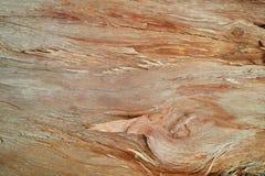 TreeBG Royalty-vrije Stock Afbeeldingen