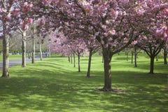 Treeblomningen parkerar in royaltyfri fotografi