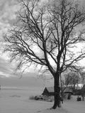 treeby arkivfoton