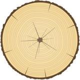 Treecirklar. Royaltyfria Bilder
