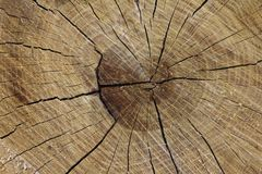 Treecirklar Royaltyfri Foto