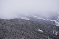 Treecovered-Berg in den Wolken lizenzfreie stockfotos