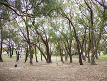 Treed Campgrounds Stock Photo