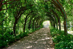 A treed tunnel. A walking path through a tunnel made of trees Stock Images