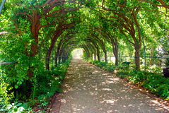 A treed tunnel. A walkway enveloped by sculpted trees Royalty Free Stock Photos