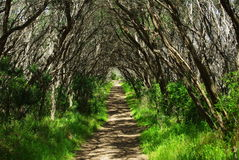 Treed walking tunnel Stock Images