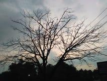 Treee Zdjęcie Stock